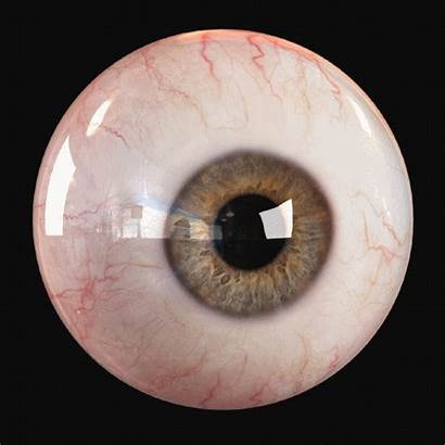 Eye Human 3d Eyes Animated Eyeball Animation
