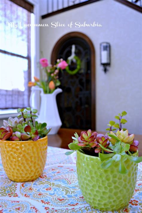 how to plant succulents indoors how to grow succulents indoors my uncommon slice of suburbia