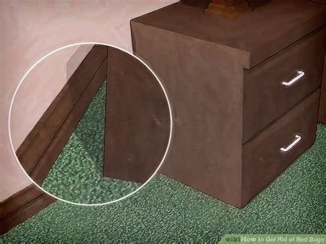 rid bed bugs pictures wikihow