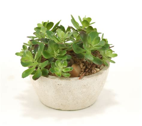 steins artificial trees silk assorted succulent garden with sand in beige planter free shipping in usa 1001shops
