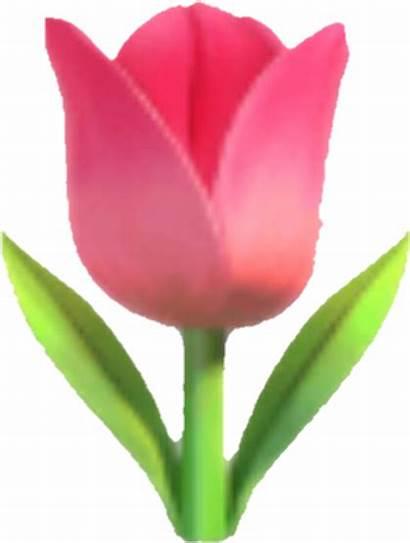 Emoji Flower Tulip Whatsapp Pinkflower Tulpe Pngkey