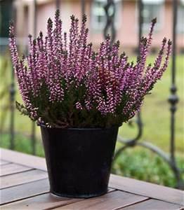 Plantes D Hiver Extérieur Balcon : plante exterieur hiver ete pivoine etc ~ Nature-et-papiers.com Idées de Décoration