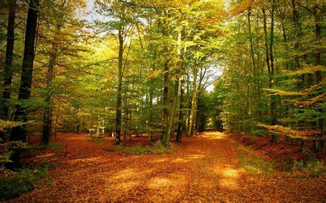 gold autumn forest wallpaper desktop hd wallpaper