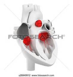 Clip Art of Heart and Valves