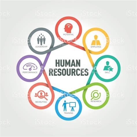 human resources clipart human resources infographic with 8 steps parts options