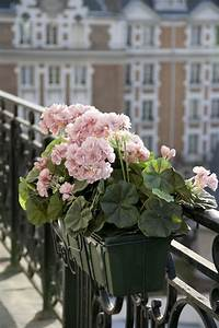 pink flowers on a paris balconylove french style With markise balkon mit tapete pink