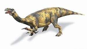 Dinosaurs Pictures And Facts All About Dinosaurs Pics