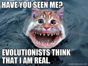 Funny Freenzy The Scariest Cat Ever! - Unsorted Funny ...