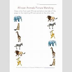 African Animals Picture Matching Printable  Preschool  Zoo  Pinterest  All Things, Pictures