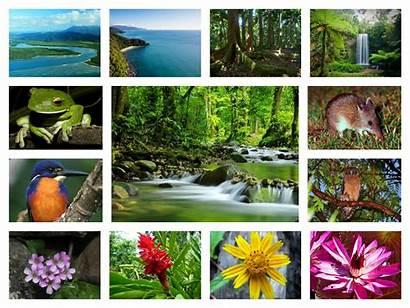 Rainforest Flora Fauna Collage Animals Con Collages