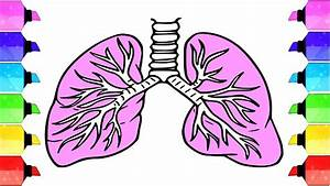 How To Draw A Lungs