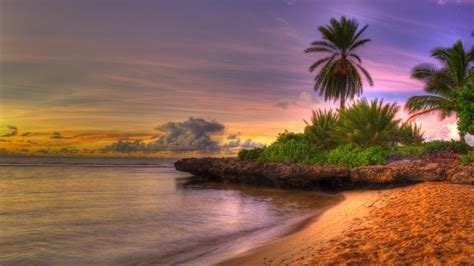 4k Palm Trees Wallpapers High Quality  Download Free