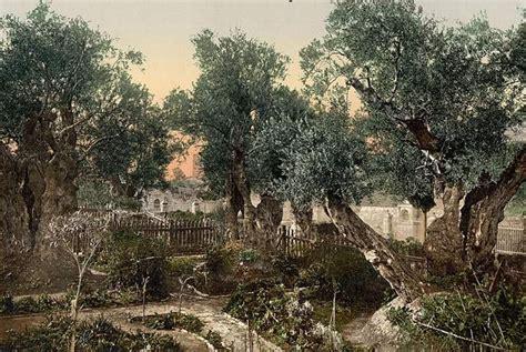 garden of gethsemane jesus at the garden of gethsemane jesus holyland