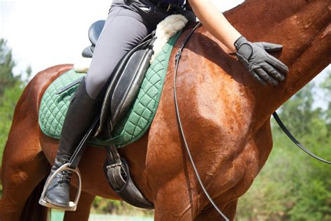 riding gloves horse massage therapy equine performance horses activities horseback market