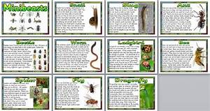 Minibeast Facts Poster Set  Includes Information About Snails  Slugs  Bees  Flies  Dragonflies