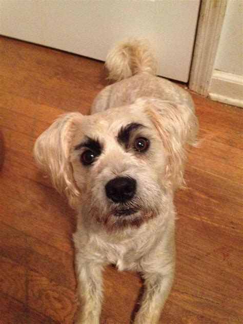 eyebrows  dogs