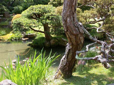Japanischer Garten Golden Gate Park by Golden Gate Park Japanese Tea Garden California Academy