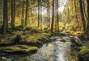 Bilder Vom Wald : urlaub mit hund im bayerischen wald g nstig bei buchen ~ Yasmunasinghe.com Haus und Dekorationen