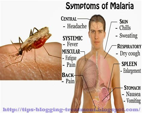 What Is The Malaria Symptoms All About?  Literacybase. Doctoral Business Administration. Pharmacist Liability Insurance. Slickdeals Office Depot Amba Wellness Program. Strataclone Blunt Pcr Cloning Kit. Moving Company In Denver Childhood Sleep Apnea. Mid Range Accounting Software. Emu College Of Business Political Science Asu. Running An Effective Help Desk
