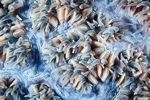 Manual Resize Of Wallpaper Macro  Supelco  Coral Polyps