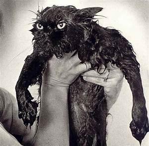 funny wet cat