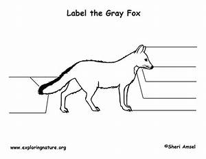 Fox  Gray  Labeling Page