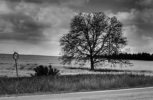 Küchenboden Schwarz Weiß : schwarz weiss landschaft foto bild landschaft baum fr hling bilder auf fotocommunity ~ Sanjose-hotels-ca.com Haus und Dekorationen