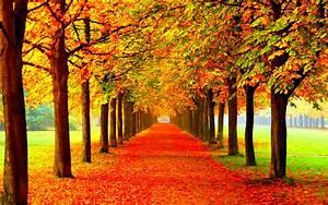 Autumn, Fall, Season, Nature, Landscape, Leaf, Leaves