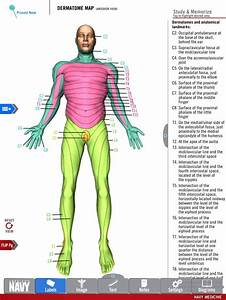 Diagram Of The Dermatome Map From The Free Anatomy Study