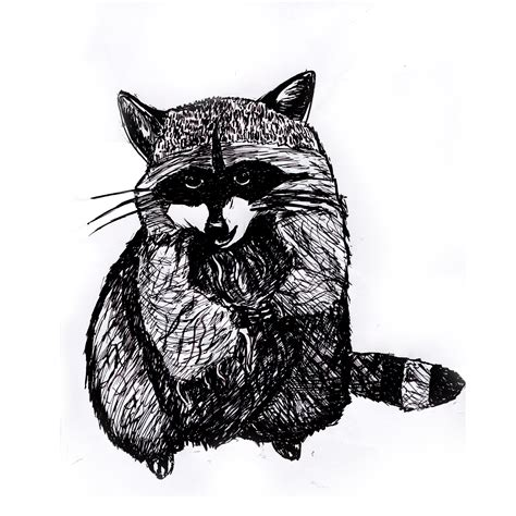raccoon print black  white animal ink drawing series