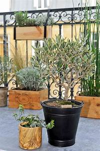 Quand Planter Un Pommier : quand tailler un arbre quand laguer un arbre ~ Dallasstarsshop.com Idées de Décoration