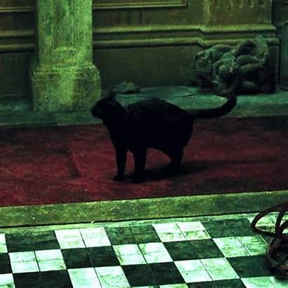 Matrix Deja Vu Cat Gifs Cool Fun