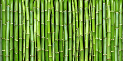 bamboo  rebel walls uk