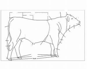 Cow External Parts