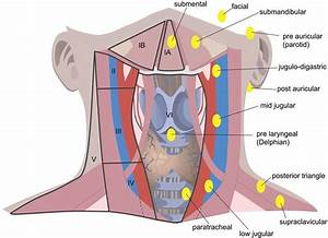Diagrams Of The Throat To Print