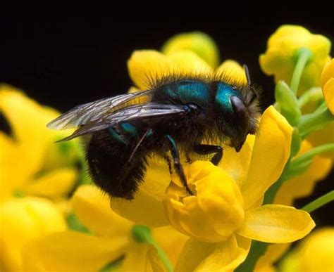 Native Bees In Texas