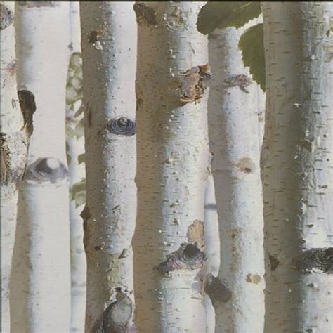 birch tree bark wallpaper gallery