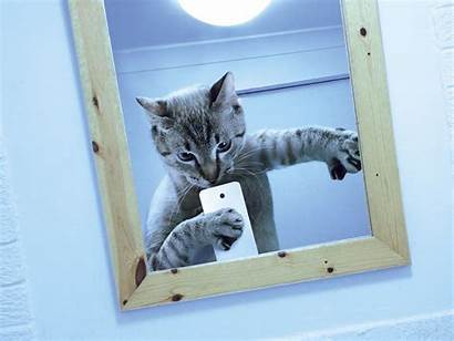 Cat Funny Backgrounds Nu Background Cats Wallpapers