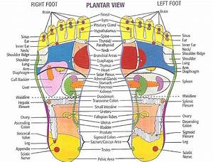 Diagram Of Bottom Of Foot For Reflexology