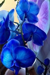 Luftwurzeln Bei Orchideen : orchidee das perfekte geschenk f r jeden anlass ~ Frokenaadalensverden.com Haus und Dekorationen