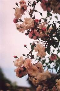 vintage flowers on Tumblr