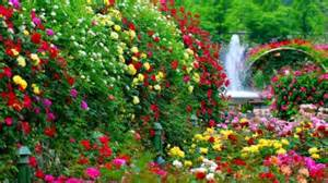 french rose garden flowers nature background wallpapers  desktop nexus image
