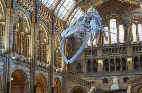 Natural History Museum, Il Museo Di Storia Naturale Qui