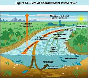 Contaminants In The Mississippi River  1987
