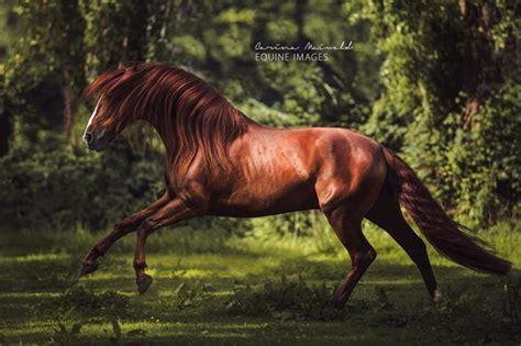 maiwald carina horse photographer equine photographers deviantart equestrian storm shadows light germany fire creative topteny
