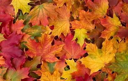 Autumn Leaves Telegram Desktop вконтакте