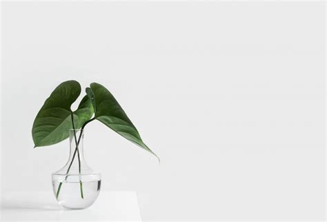minimalist plants minimal plant leaf 187 freely photos