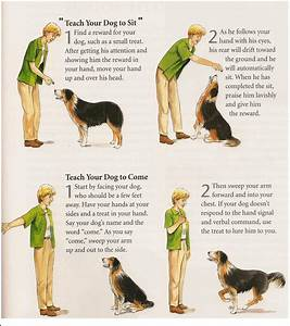dog commands training dog not to jump and bite training With dog training commands