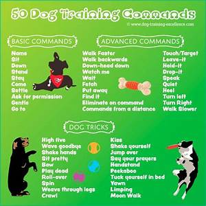 dog training commands dog obedience commands list of dog With dog training commands