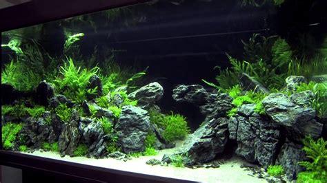 xl tanks   aquascaping contest  art